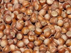 hazelnuts-brown-nuts-open-68483.jpeg